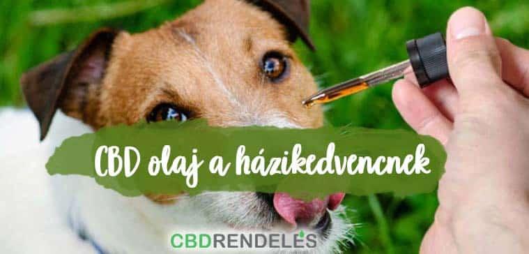 CBD olaj kutyáknak